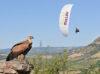 parapente vautour vol